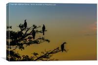 Anhinga Sunset, Canvas Print