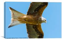 Red Kite Soaring in Blue Sky, Canvas Print