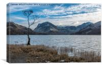 The Lone Tree , Buttermere, Canvas Print