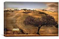 Rural Spain View, Canvas Print
