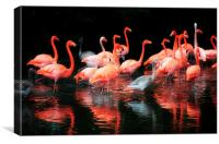 Flamingos Reflected, Canvas Print