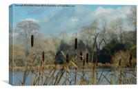 Water Reeds, Canvas Print