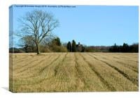 Straight lines in crop field., Canvas Print