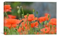 Poppy Flowers, Canvas Print