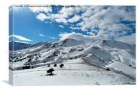 Winter beauty,