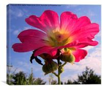 The gloru of a beautiful flower,