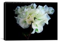 A nice white  flower,