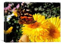 Butterfly on a nice flower,