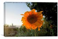 Sunflower at AVERSE tourism garden,