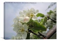 Wild plum's blossoms 5,, Canvas Print