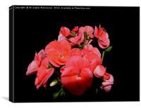 geranium,, Canvas Print