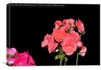 geranium,
