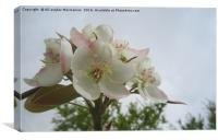 Pear blossoms (revised),