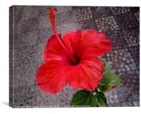 A nice red flower,, Canvas Print