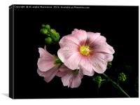 hollyhocو, Canvas Print