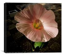 A beautiful flower in my yard,, Canvas Print
