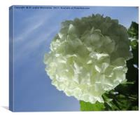 A nice white flower,, Canvas Print