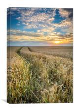 Wheat fields of Dersingham at sunset, Canvas Print