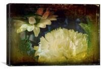 Chrysanthemums, Canvas Print