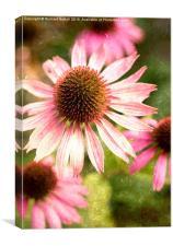 Autumn Echinacea, Canvas Print