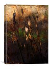 Poppy Seed Heads, Canvas Print
