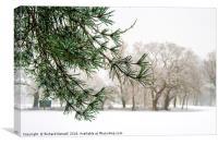 Winter Pine Tree, Canvas Print
