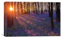 Bluebell sunset, Canvas Print