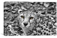 Hungry Eyes!, Canvas Print