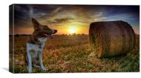 Sunset with Caley, Canvas Print