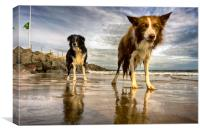 The Collies, Canvas Print