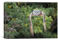 Owl In Flight., Canvas Print