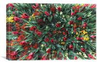 Flower Burst, Canvas Print