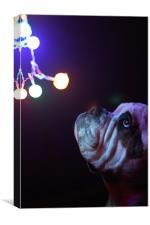Dog with Christmas lights, Canvas Print