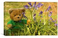 spring bear , Canvas Print