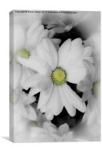 flower for you , Canvas Print