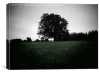 Trent park at dusk , Canvas Print