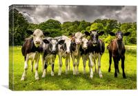 The  Darbyshire Calves , Canvas Print