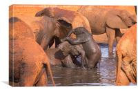 Baby Elephants Playing, Canvas Print