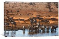 Busy time at the waterhole, Canvas Print