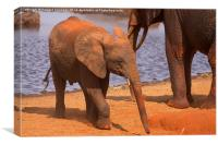 Baby Elephant by a waterhole, Canvas Print
