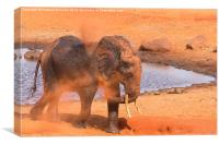 Elephant dust bathing, Canvas Print