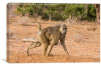 Yellow Baboon Mother, Canvas Print