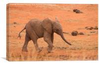 Baby Elephant, Canvas Print