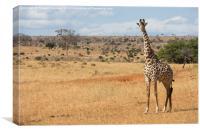 Masia Giraffe Bull, Canvas Print