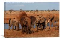 Elephant dust bathing, Canvas Print