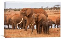 Small, Medium and Large Elephants, Canvas Print