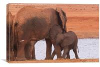 Baby Elephant playing with Mum, Canvas Print