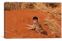 Baby Yellow Baboon, Canvas Print