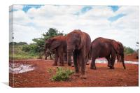 Baby Elephants at orphanage, Canvas Print