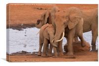Elephant Love , Canvas Print